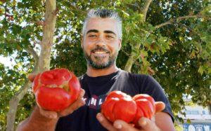 O Μαΐστρος Καραμπάσης καμαρώνει για τις πεντανόστιμες ντομάτες του από παραδοσιακό σπόρο.